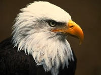 Photo of an eagle